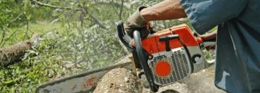 terratrainingen - cursus boomveiligheidscontroleur